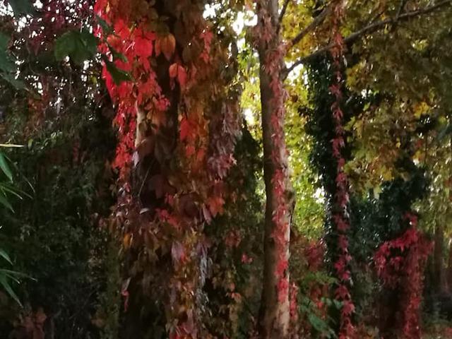 Minden fa egy erdőt rejt magában!