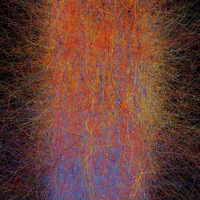 Virtuális séta agyunk áramköreiben