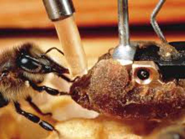 Robot-állat interakció, mint új kutatási módszer