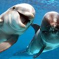 A delfin árnyoldala