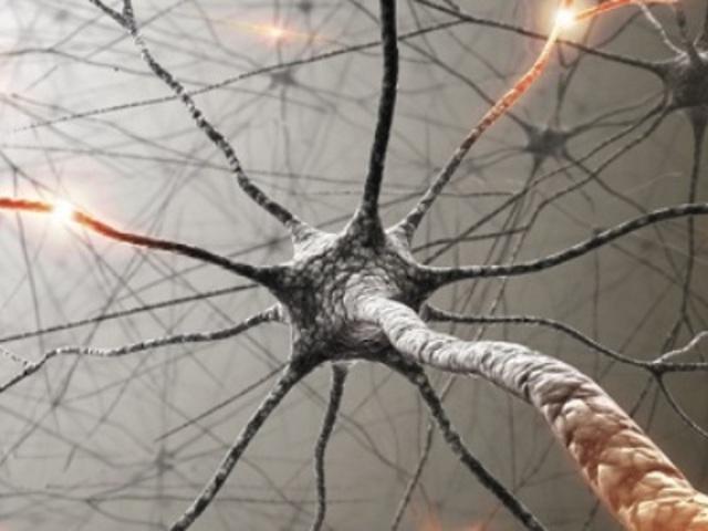 Somogyi Péter: Szentágothai kandelábersejtje rávilágít tudatunkra és az agykéregről való ismereteink korlátaira