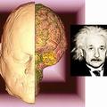 Forradalmi változások az agykutatásban - új TV-sorozat