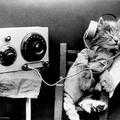 Tudósok speciális zenét szereztek macskáknak