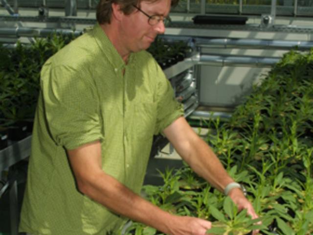 Növényi IQ