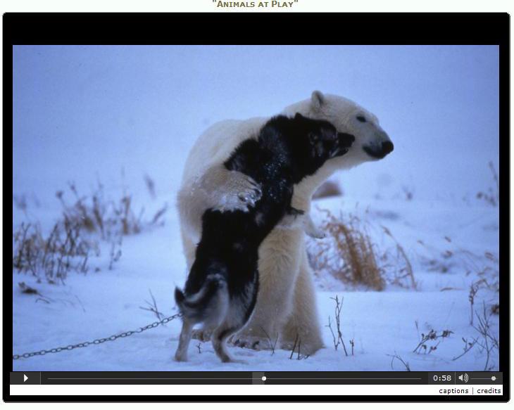 játék-Stuart Brown -jegesmedve-husky kutya.jpg