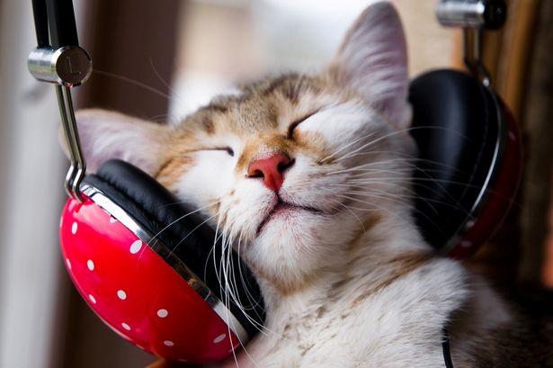 main-cat-music.jpg