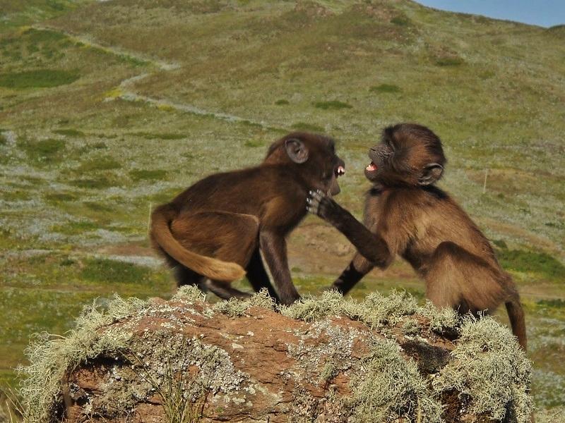 nevetés-majmok-játékarc (800x600).jpg