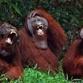 Aki utoljára nevet - A humor evolúciója