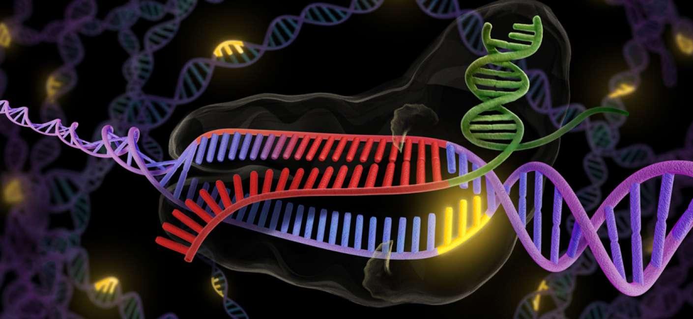 Szerkesszünk géneket!