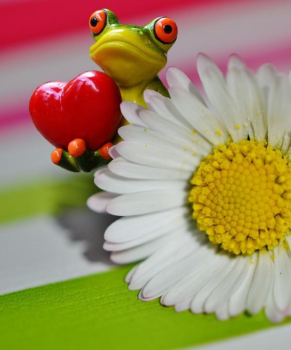 frog-1308474_960_720.jpg