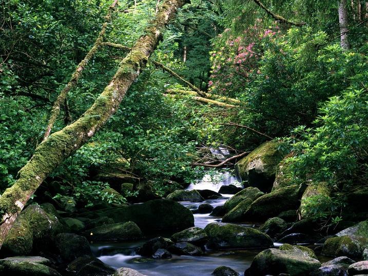 Owengarriff_river_cascades.jpg