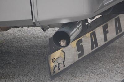 bird_in_the_exhaust_pipe.jpg