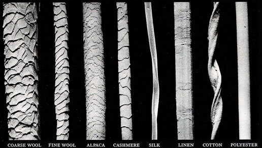 different_fibers_under_electron_microscope.jpg