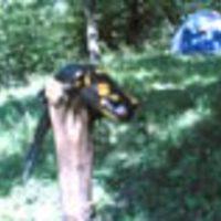 csipkeorom-vaddisznórét