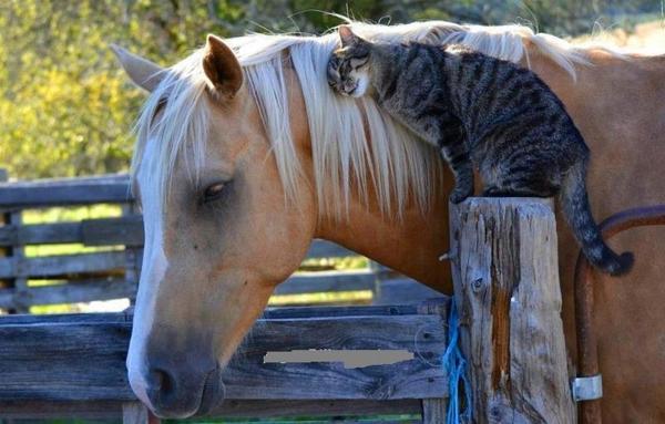 Feltétel-nélküli-szeretet-cica-és-ló-között.jpg