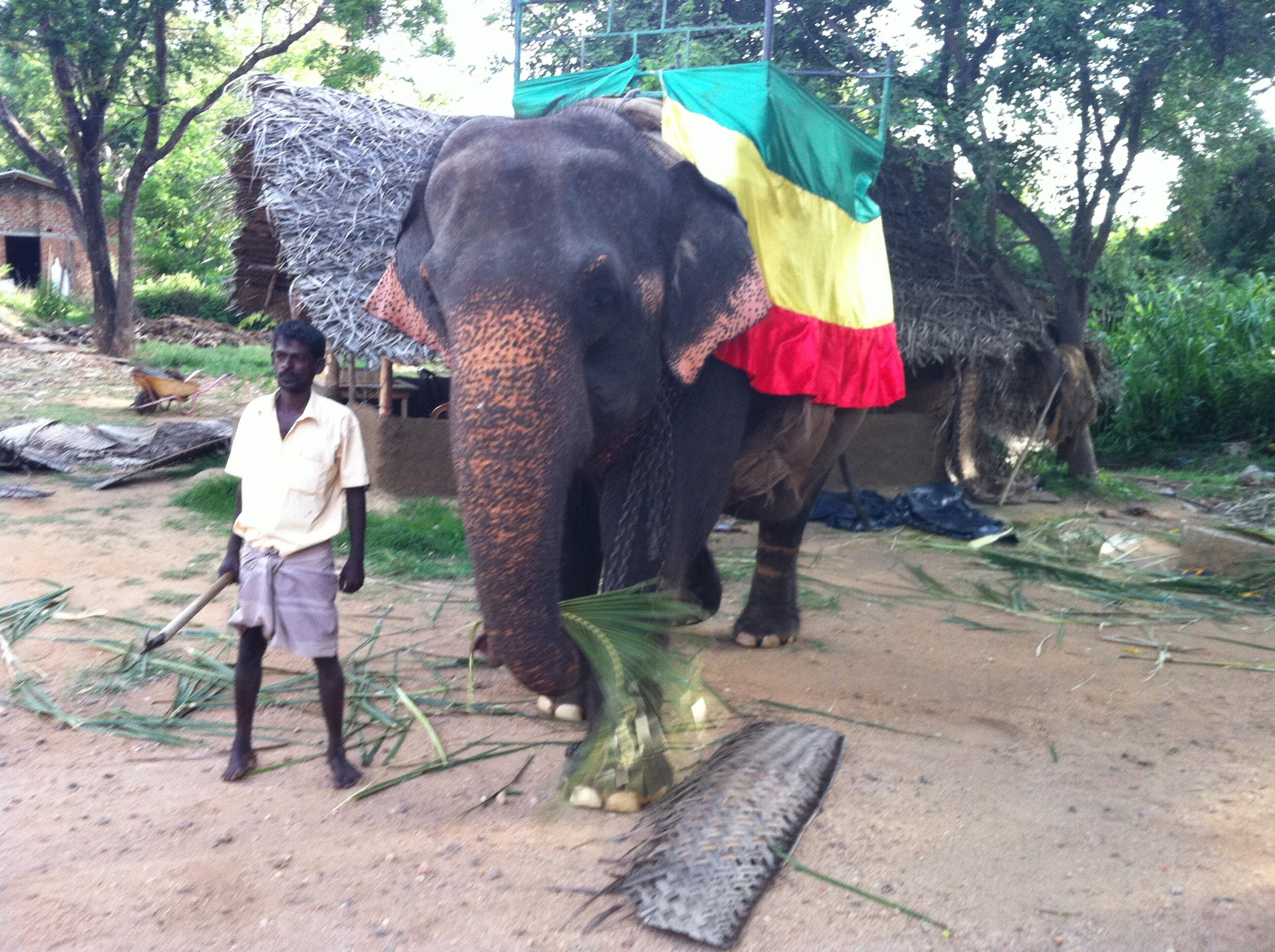 elefánt van bőven