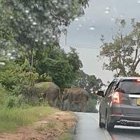 Sri Lanka 2.