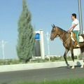 Lóháton Asgabatban