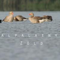 Megújul a Dunán a Talpalatnyi Zöld ökológiai magazin