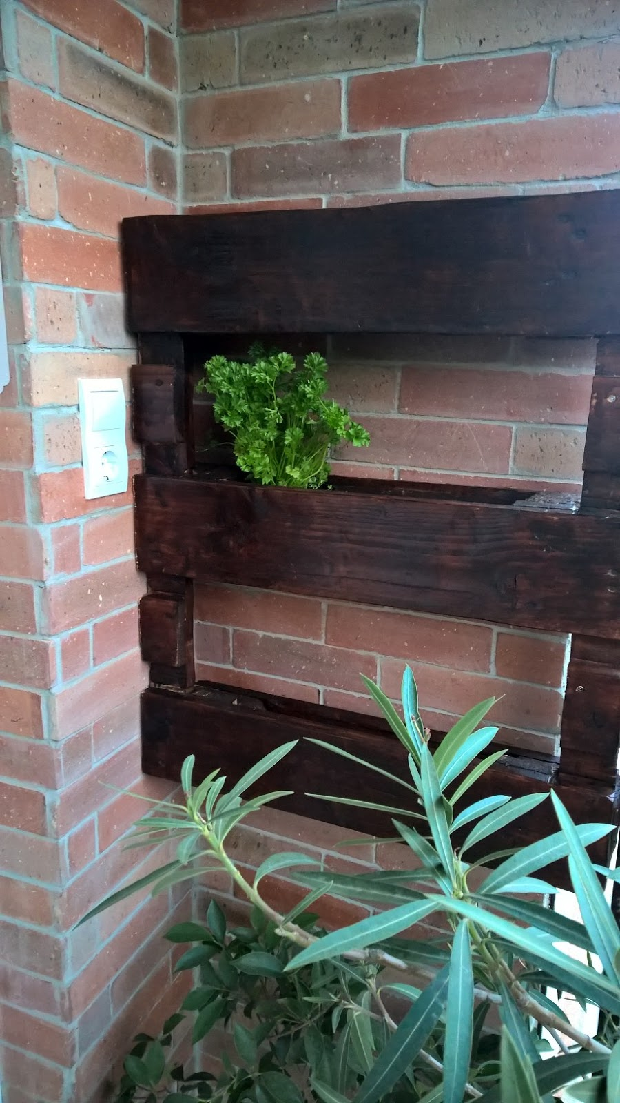 Beköltözött a petrezselyem a fűszernövény tartóba!