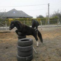 Rudi az ugrópóni - nullás lovak