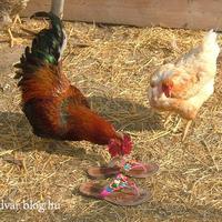 A helytelen lábbeli használat -majdnem- véres következményei