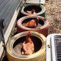 Újrahasznosítás a tyúkudvarban 2.- Használt gumiabroncsból porfürdő