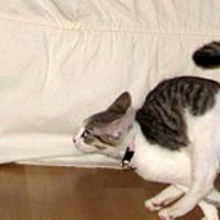 A macskánk és a futás
