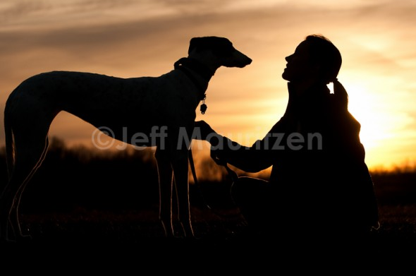 greyhound_sunset2.jpg