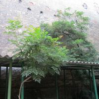 Kocsibeálló és ápolt kert szimbiózisa az Ilka utcában