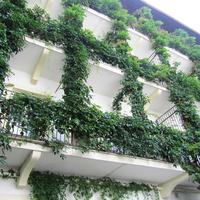 Egy klassz udvar Pozsonyból – az Udvarbolond szomszédol