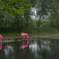 Ha a természet a vászon - Michael McGillis művészete