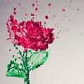 Rózsavíz: az ezerarcú sziromcsoda kívülre, belülre