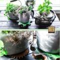 Beltéri zöld egységek - mini fűszernövény-spot a lakásban