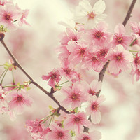 Cseresznyevirágos ébredések