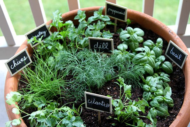 indoor-herb-garden-ideas-one-pot.jpg