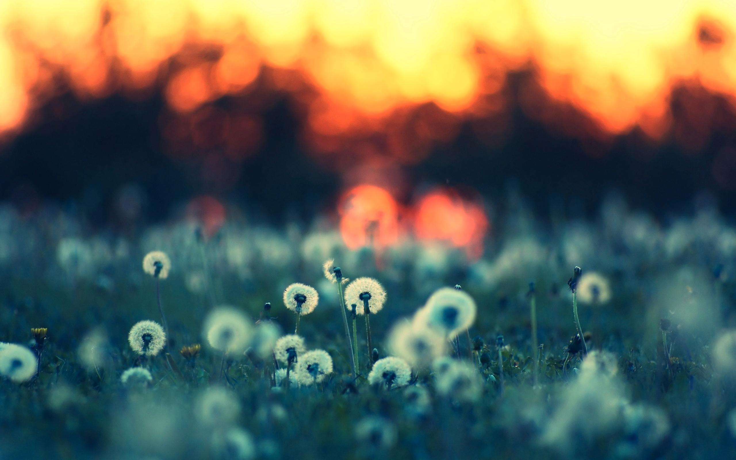 2012-mother-s-day-beautiful-flower-midsummer-meadow_2560x1600_97330.jpg