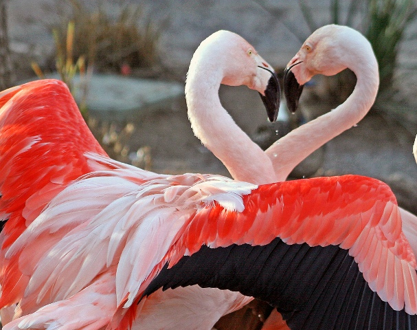 animal-picture-flamingo-kjunstorm-photo.jpg
