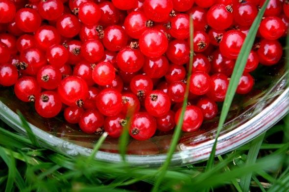 currants-bowl-in-grass-590.jpg