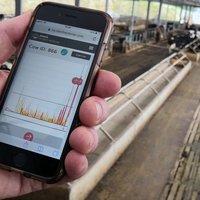 Angliában már a tehén is 5G-vel megy