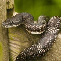 Megharapta egy kígyó, bosszúból megharapta