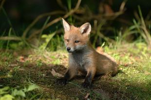 WWF: 53 százalékkal csökkentek az erdőben élő gerincesek populációi 50 év alatt