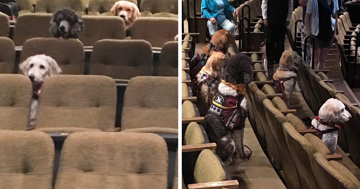 service-dogs-training-musical-billy-elliot-fb3.png