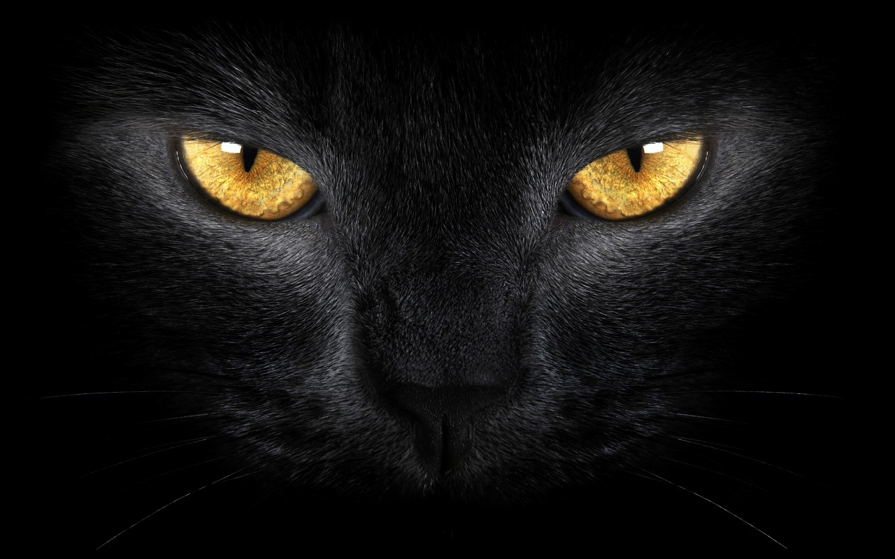 black-cat-face-1280x800_1.jpg