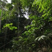 Kitekintés: Az esőerdő a világ gyógyszertára
