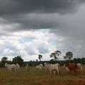 TreeViver hírek: Fotónapló Amazóniából - A terület bemutatása (részlet)