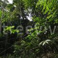 TreeViver hírek: Fotónapló Amazóniából - Történelmi barangolás a térségben (részlet)
