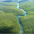 TreeViver: Az esőerdők jelentősége
