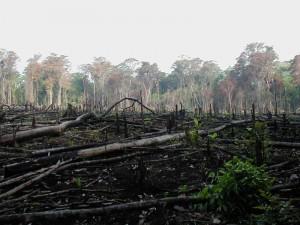 Tarvágott erdőrészlet