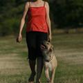 A kutyatulajdonosok naponta 22 perccel többet sétálnak, de vajon lényeges különbség ez?